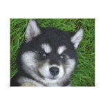 Adorable Alusky Puppy Dog Canvas Print