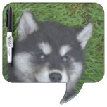 Adorable Alusky Puppy Dog Dry Erase Board