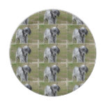 Adorable Black and White English Setter Dog Paper Plate