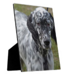 Adorable Black and White English Setter Plaque