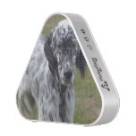 Adorable Black and White English Setter Speaker