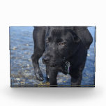 Adorable Black Lab Puppy Dog Acrylic Award