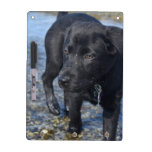 Adorable Black Lab Puppy Dog Dry Erase Board