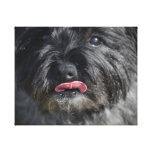 Adorable Cairn Terrier Canvas Print