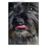 Adorable Cairn Terrier Card