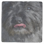 Adorable Cairn Terrier Stone Coaster