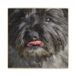 Adorable Cairn Terrier Wooden Coaster