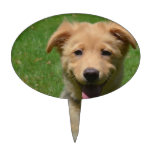 Adorable Nova Scotia Duck Tolling Retriever Puppy Cake Topper