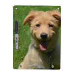 Adorable Nova Scotia Duck Tolling Retriever Puppy Dry Erase Board
