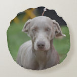 Adorable Weimaraner Round Pillow