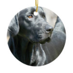 Alert Black Labrador Retriever Dog Ornament