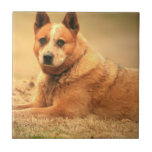 Australian Red Cattle Dog Tiles