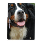 Baby Bernese Mountain Dog Dry-Erase Board