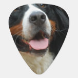 Baby Bernese Mountain Dog Guitar Pick
