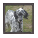 Beautiful English Setter Dog Gift Box