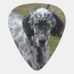 Beautiful English Setter Dog Guitar Pick
