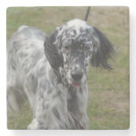 Beautiful English Setter Dog Stone Coaster