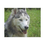 Beautiful Siberian Husky Puppy Dog Canvas Print