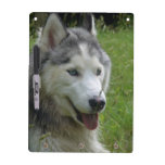 Beautiful Siberian Husky Puppy Dog Dry Erase Board