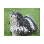 Black and White Puli Dog Canvas Print