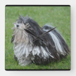 Black and White Puli Dog Square Wall Clock