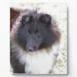 Black and White Sheltie Plaque