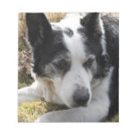 Black Australian Cattle Dog Notepad