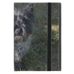 Black Cairn Terrier Case For iPad Mini