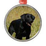 Black Lab in Field  Ornament