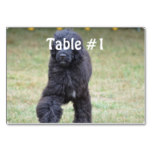 Black Portuguese Water Dog Table Number