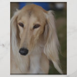 Blonde Saluki Dog