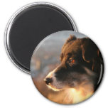 Border Collie Photos Magnet