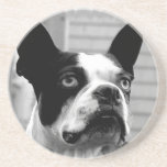 Boston Terrier Dog Coasters