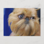 Brussels Griffon Dog Postcard