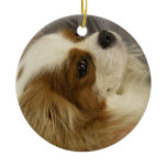 Cavalier Cocker Spaniel Ornament
