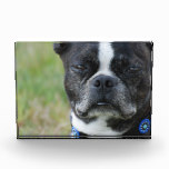 Classic Boston Terrier Dog Acrylic Award