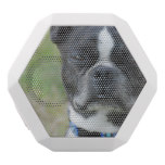 Classic Boston Terrier Dog White Bluetooth Speaker