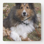 collie-6 square wall clock