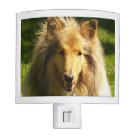 Collie Dog Night Light