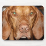 Coon Hound Mouse Pad