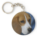 Cute Beagle  Keychain
