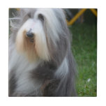 Cute Bearded Collie Tile