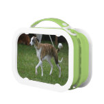 Cute Greyhound Lunch Box