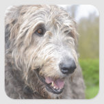 Cute Irish Wolfhound Square Sticker