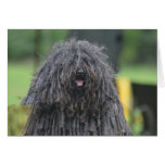 Cute Puli Dog