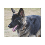 Cute Shiloh Shepherd Canvas Print