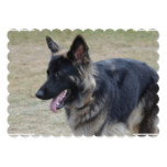 Cute Shiloh Shepherd Card
