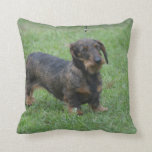 Cute Wire Haired Dachshund Throw Pillow