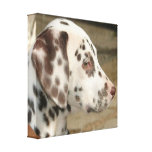 Dalmatian Puppy Canvas Print