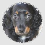 Daschund Puppy Dog Stickers